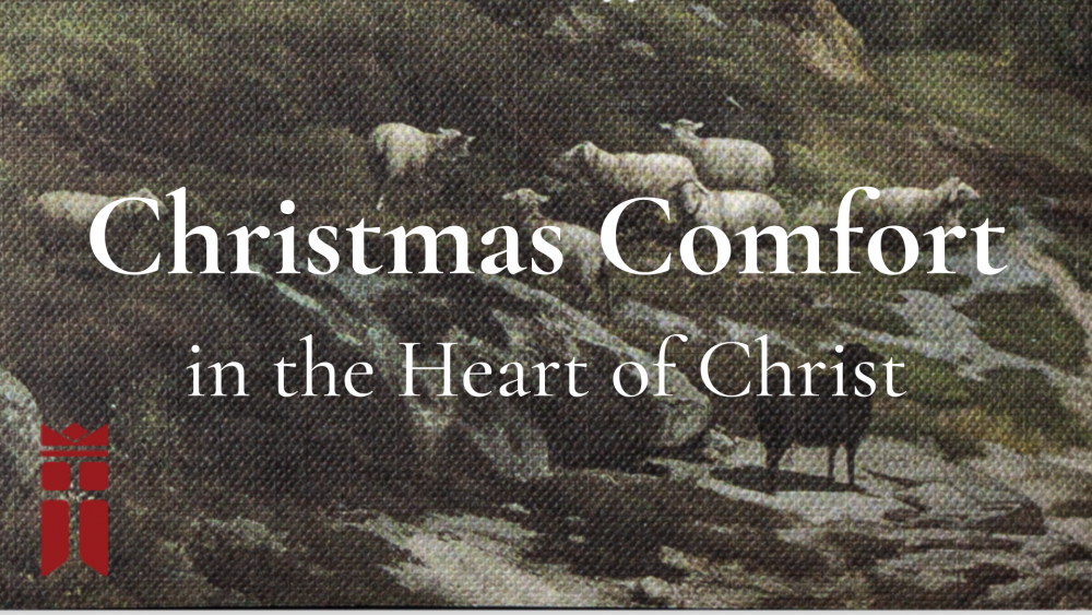 Christmas Comfort in the Heart of Christ
